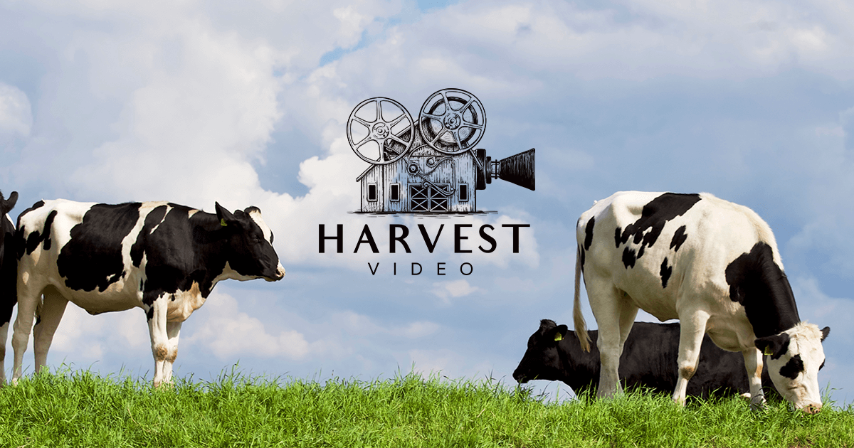 Harvest Video website launched